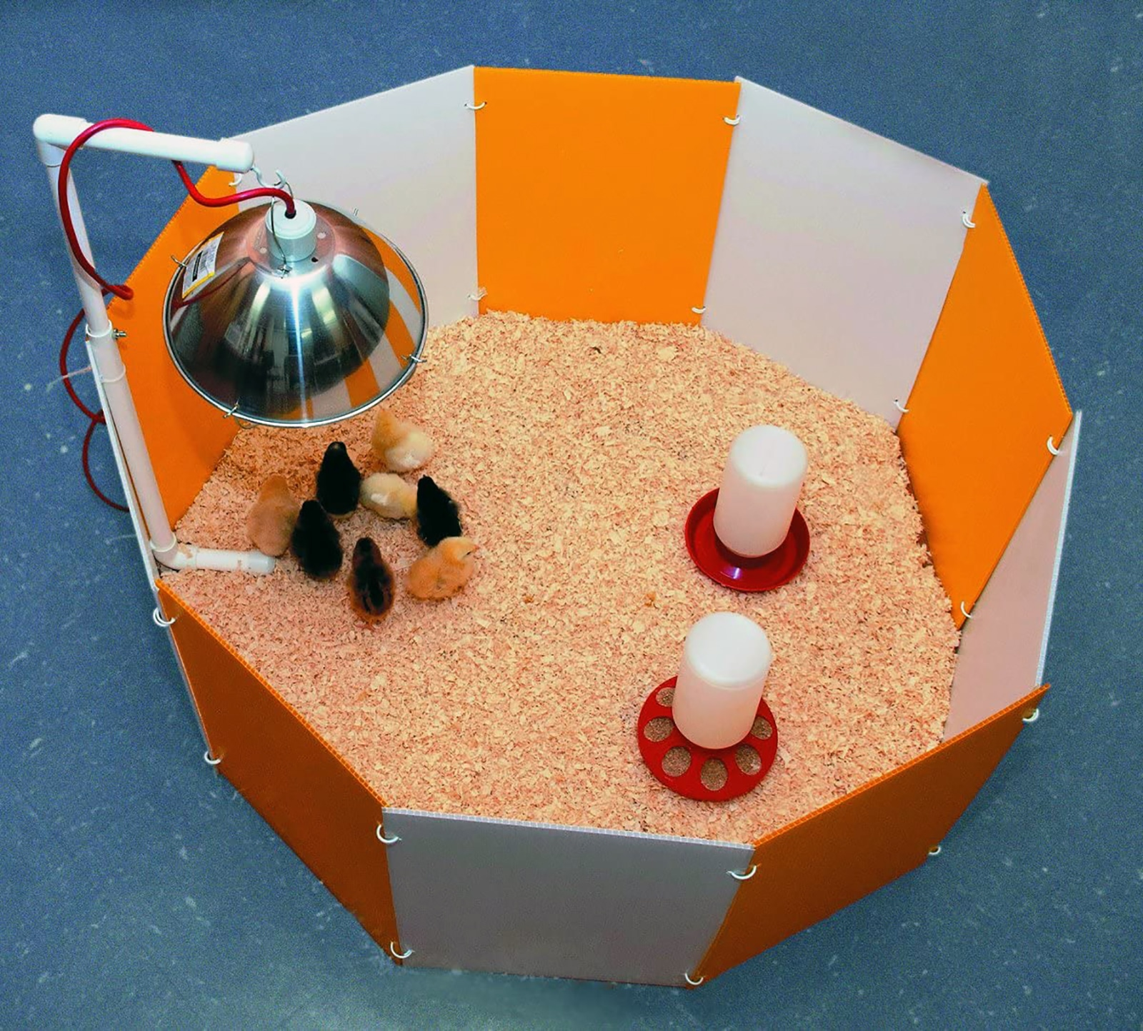Baby Chick Starter Home Kit review