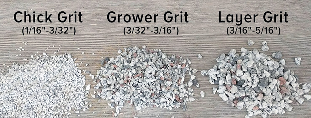 grit for chickens