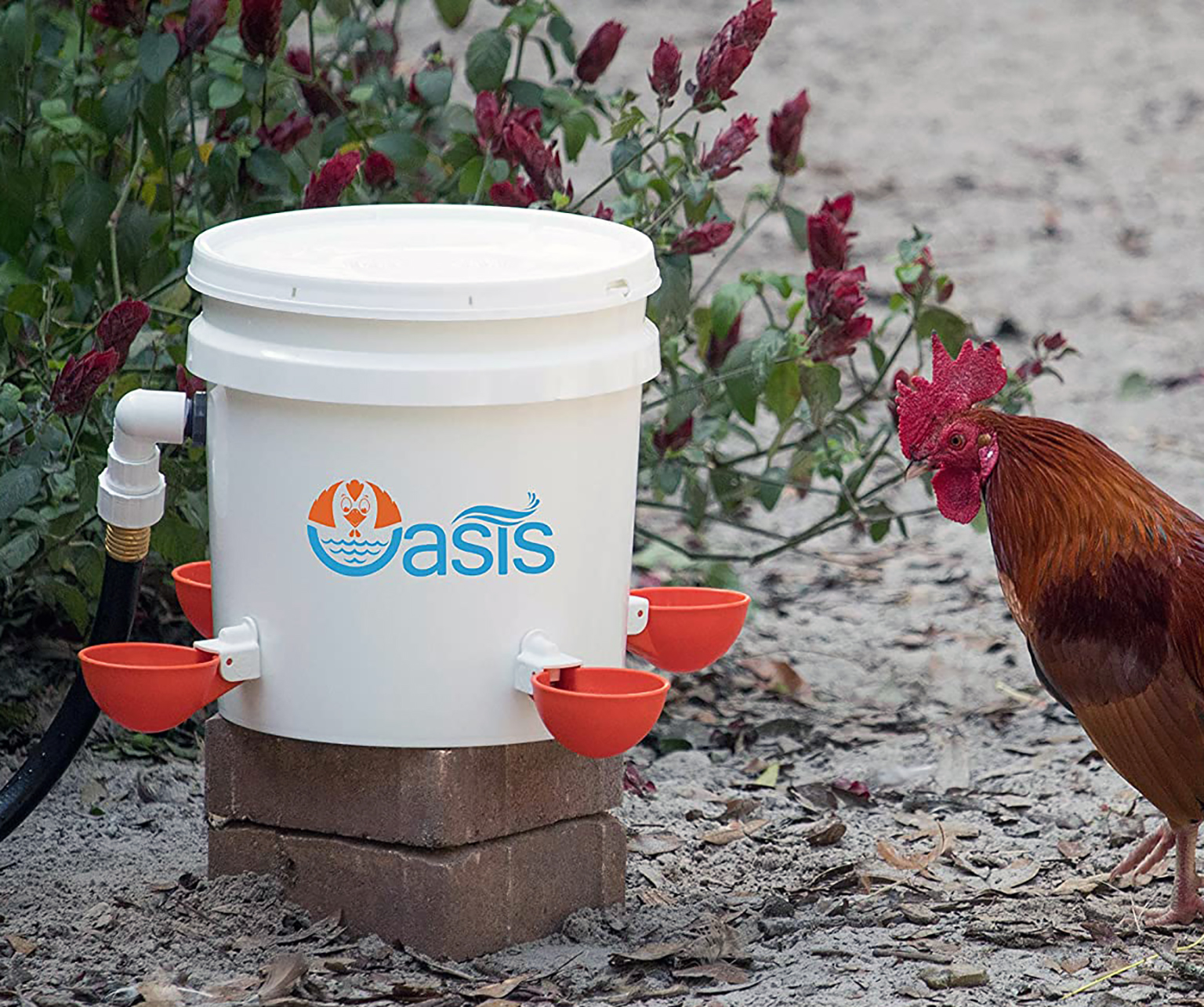 best watering system for chickens